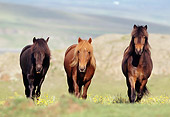 HOR 01 SS0085 01