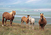 HOR 01 SS0087 01
