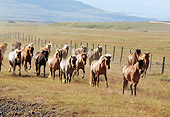 HOR 01 SS0088 01