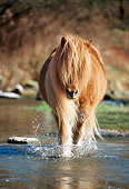 HOR 01 SS0095 01