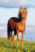HOR 01 SS0096 01
