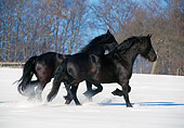 HOR 01 SS0099 01