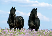 HOR 01 SS0100 01