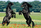 HOR 01 SS0103 01