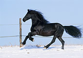 HOR 01 SS0106 01