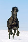 HOR 01 SS0107 01