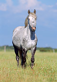 HOR 01 SS0113 01