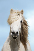 HOR 01 SS0147 01