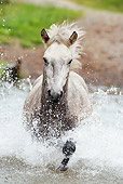 HOR 01 SS0149 01