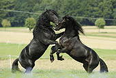 HOR 01 SS0150 01