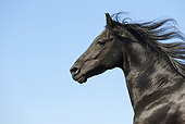 HOR 01 SS0152 01
