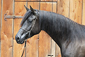 HOR 01 SS0153 01