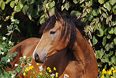 HOR 01 SS0156 01
