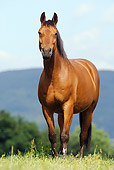 HOR 01 SS0158 01