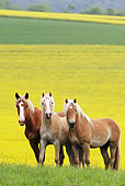 HOR 01 SS0159 01