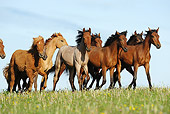HOR 01 SS0160 01