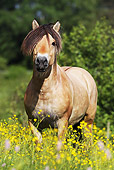 HOR 01 SS0163 01