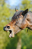 HOR 01 SS0164 01
