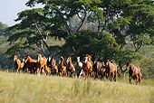 HOR 01 SS0168 01