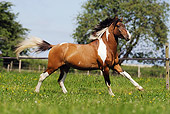 HOR 01 SS0169 01