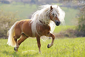 HOR 01 SS0170 01
