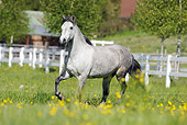 HOR 01 SS0173 01