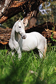 HOR 01 SS0174 01