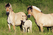 HOR 01 SS0176 01