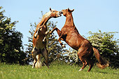 HOR 01 SS0179 01