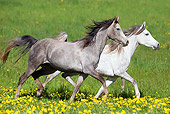 HOR 01 SS0180 01
