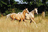 HOR 01 SS0182 01