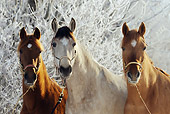 HOR 01 SS0184 01
