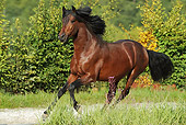 HOR 01 SS0188 01