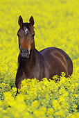 HOR 01 SS0190 01