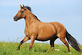 HOR 01 SS0192 01