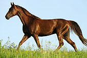 HOR 01 SS0193 01