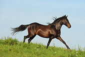 HOR 01 SS0194 01
