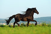 HOR 01 SS0196 01