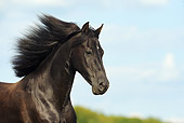HOR 01 SS0197 01