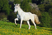 HOR 01 SS0203 01