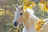 HOR 01 SS0216 01