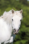 HOR 01 SS0217 01