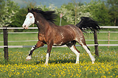 HOR 01 SS0225 01