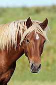 HOR 01 SS0230 01