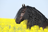 HOR 01 SS0236 01