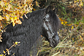 HOR 01 SS0237 01