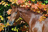 HOR 01 SS0240 01