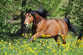 HOR 01 SS0246 01