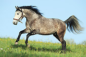 HOR 01 SS0248 01