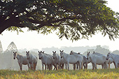 HOR 01 SS0251 01